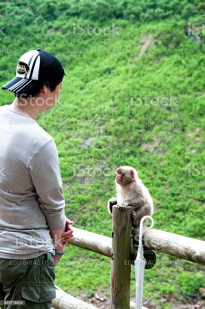 Japanese Macaque looking at man stock photo