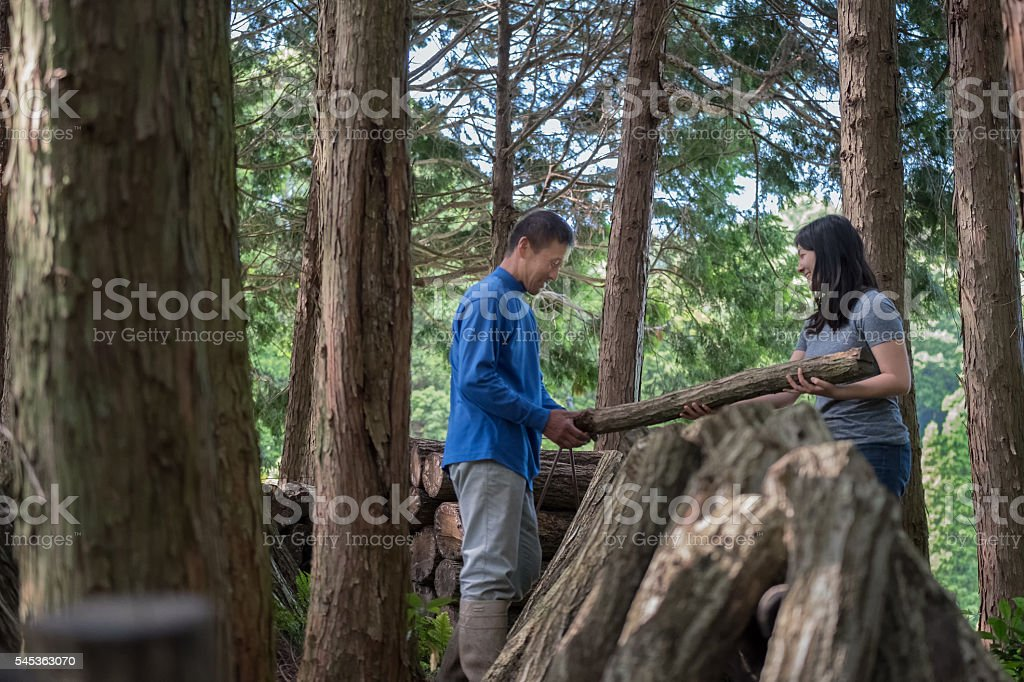 Japanese Man, Woman Stacking Logs for Mushroom Growing in Forest stock photo