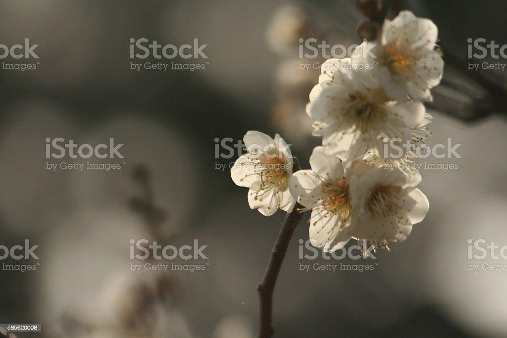 Japanese name, Houryukaku Part 3 stock photo