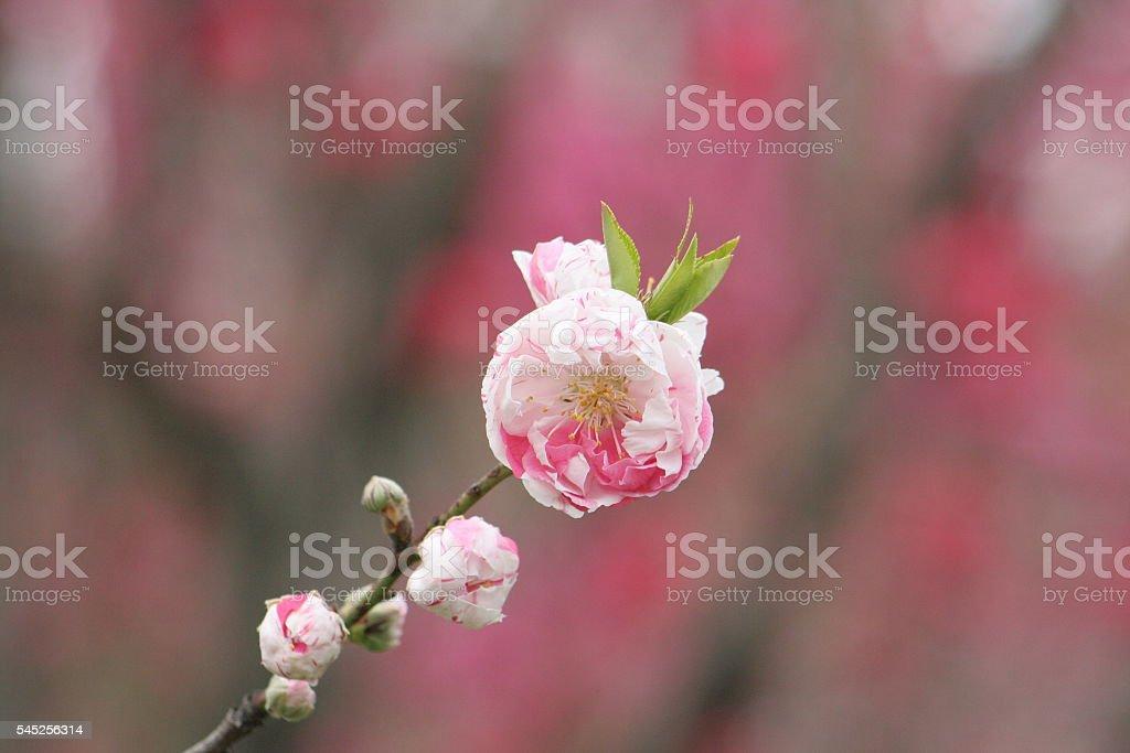 Japanese name, KyoSarasa stock photo