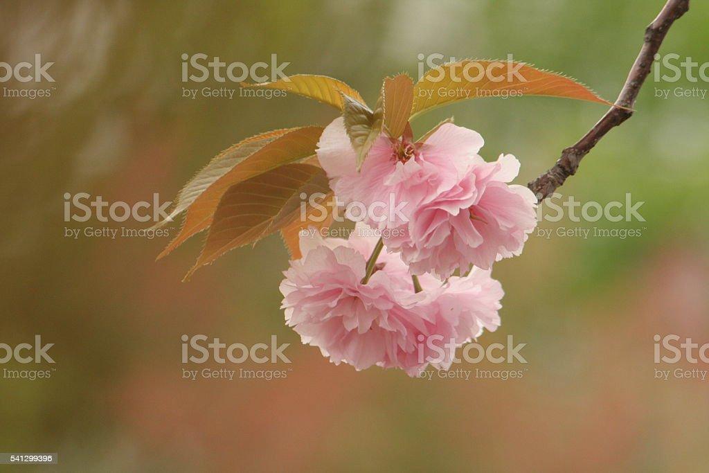 Japanese name, Sekiyama Part 3 stock photo