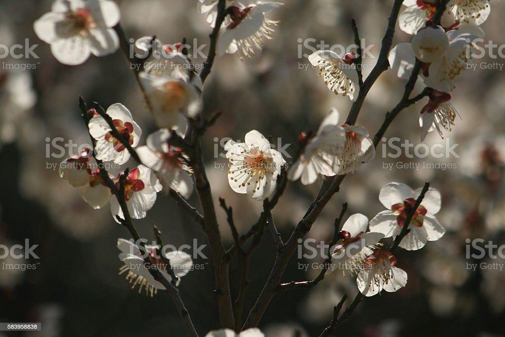 Japanese name, Touji Part 1 stock photo