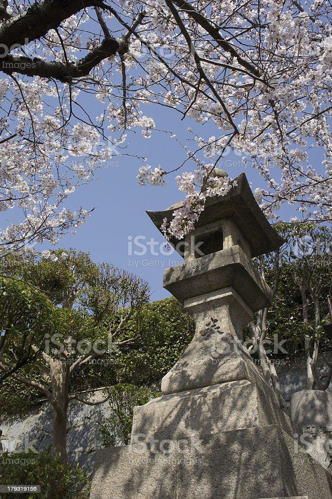 Japanese Sakura and Tourou (stone lantern) royalty-free stock photo