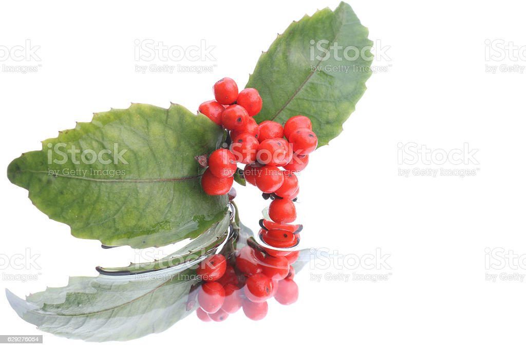 Japanese sarcandra glabra on water background #3 stock photo