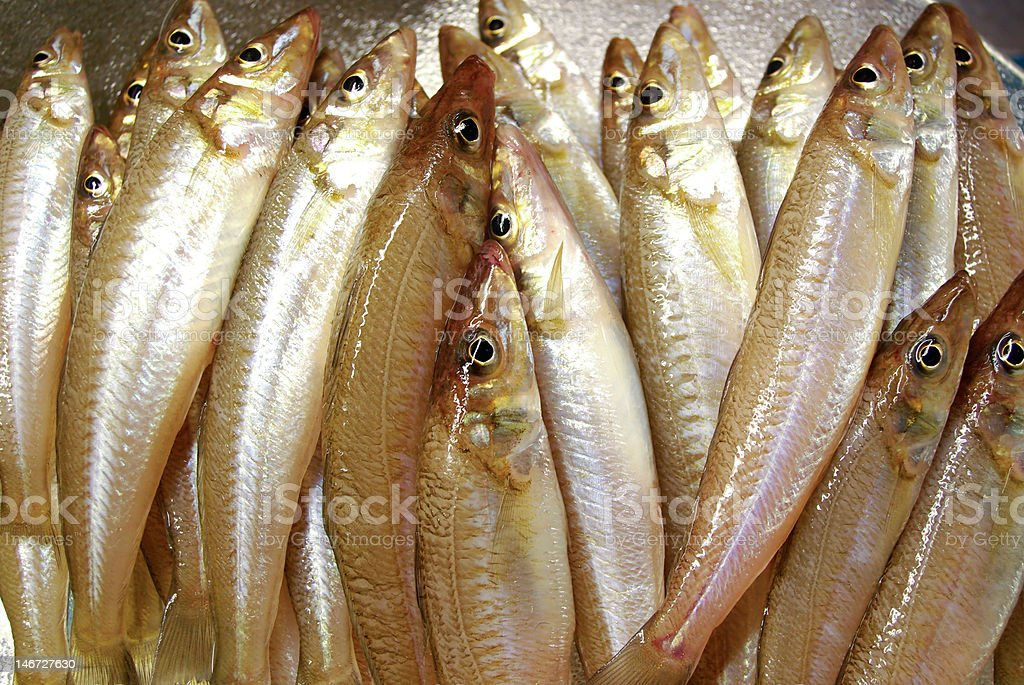 Japanese silver whiting stock photo