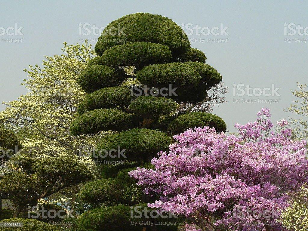 Japanese spring royalty-free stock photo