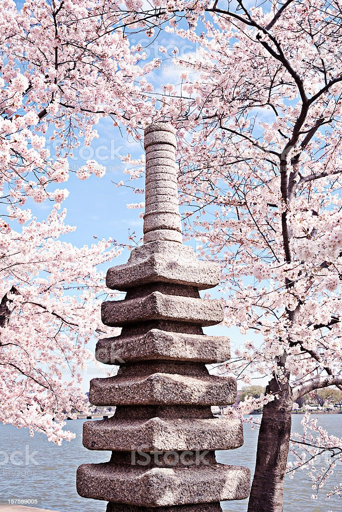 Japanese style altar with cherry blossom background stock photo