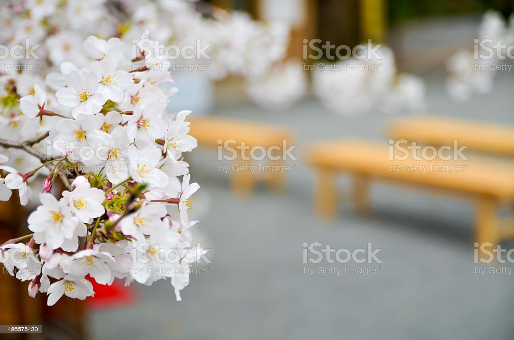 Japanese tea party in Spring stock photo