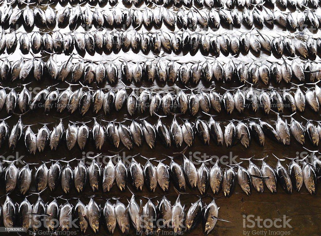 Japanese Tuna at market stock photo