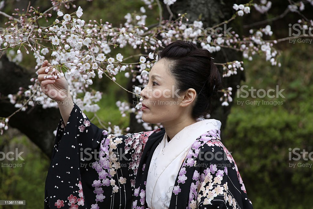 Japanese woman enjoying cherry blossoms royalty-free stock photo