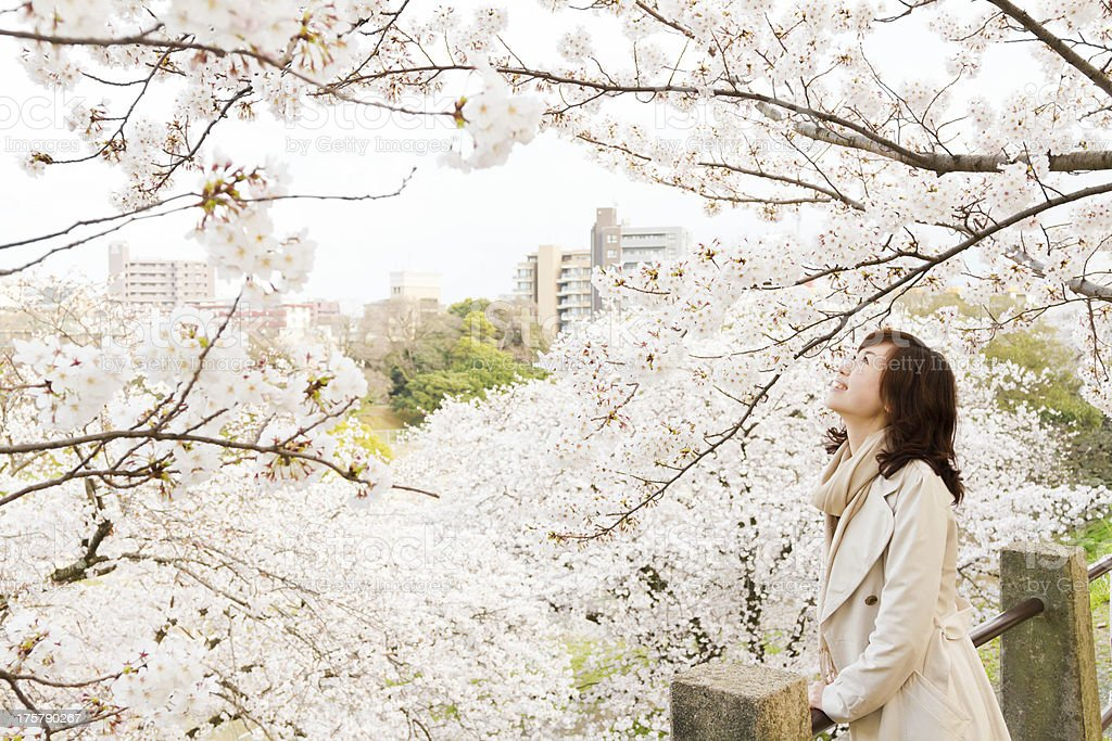 Japanese Woman Looking at Cherry Blossoms stock photo