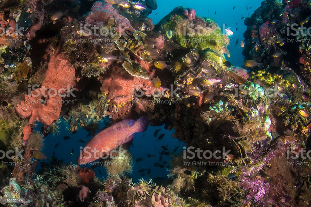 Japanese wreck - Palau, Micronesia stock photo
