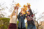 Japanese young girls playing with autumn leaves