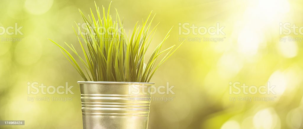jar of plant growing royalty-free stock photo