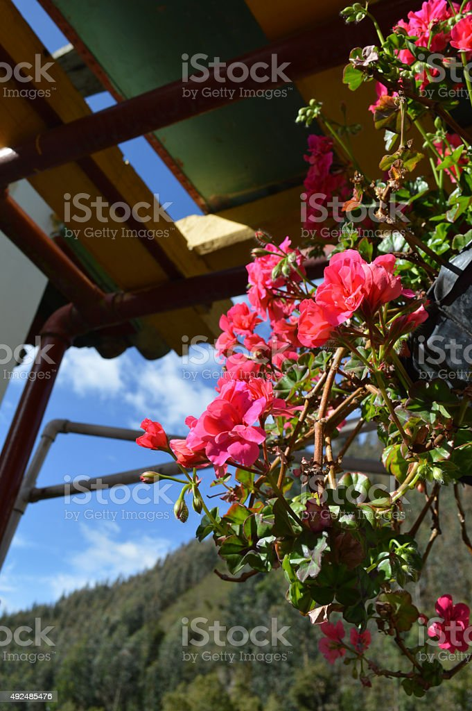 Jardín colgante de flores silvestres stock photo