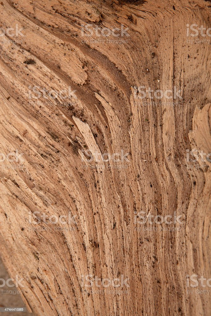 Jars oak stock photo