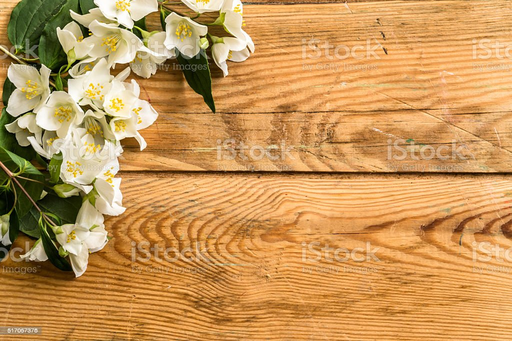 Jasmine blossom on wood background. stock photo