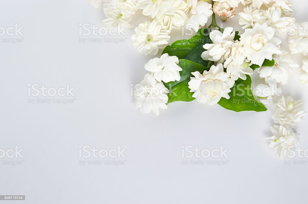 Jasmine flowers isolated on white background top view stock photo