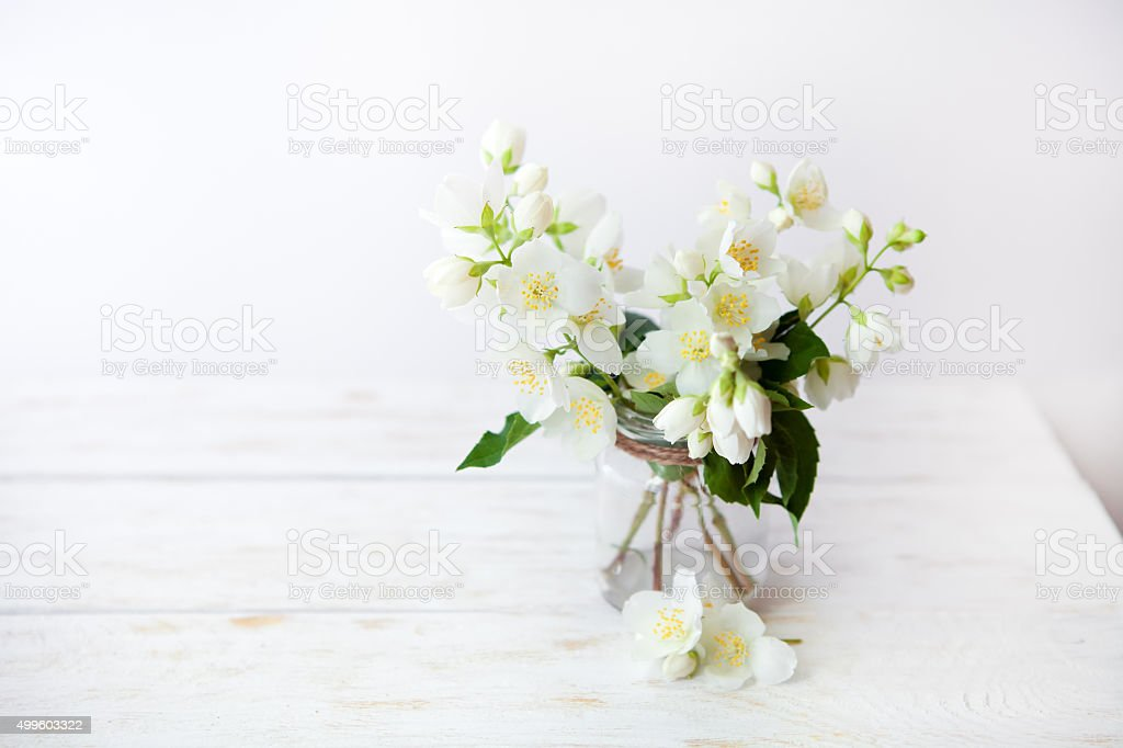 Jasmine flowers on nature spring background. stock photo