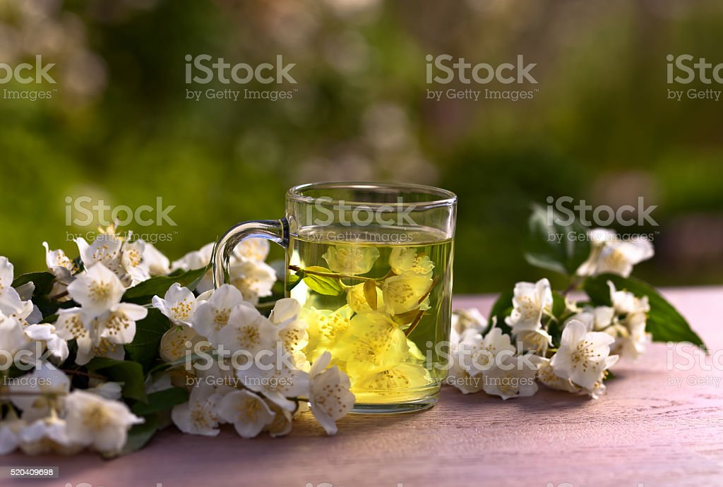 jasmine tea in garden stock photo