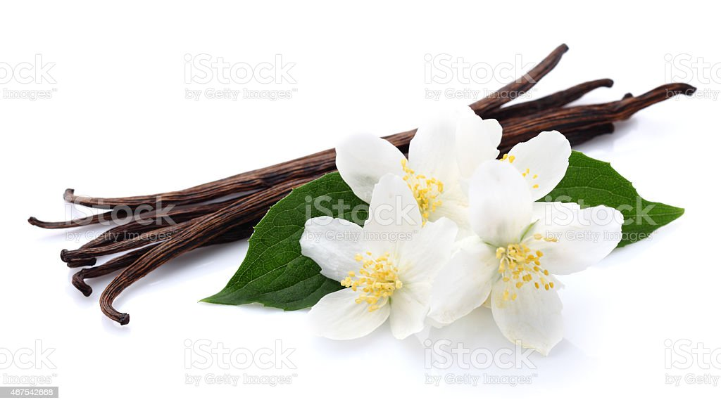 Jasmine with vanilla stock photo