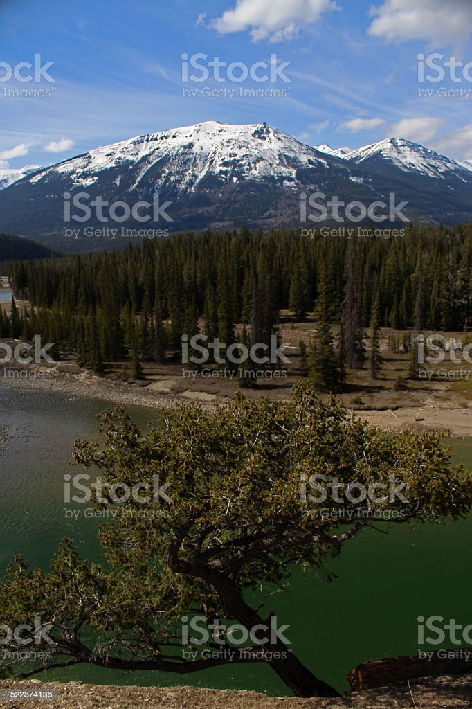 Jasper Landscape Featuring Dwarfed Whitebark Pine stock photo