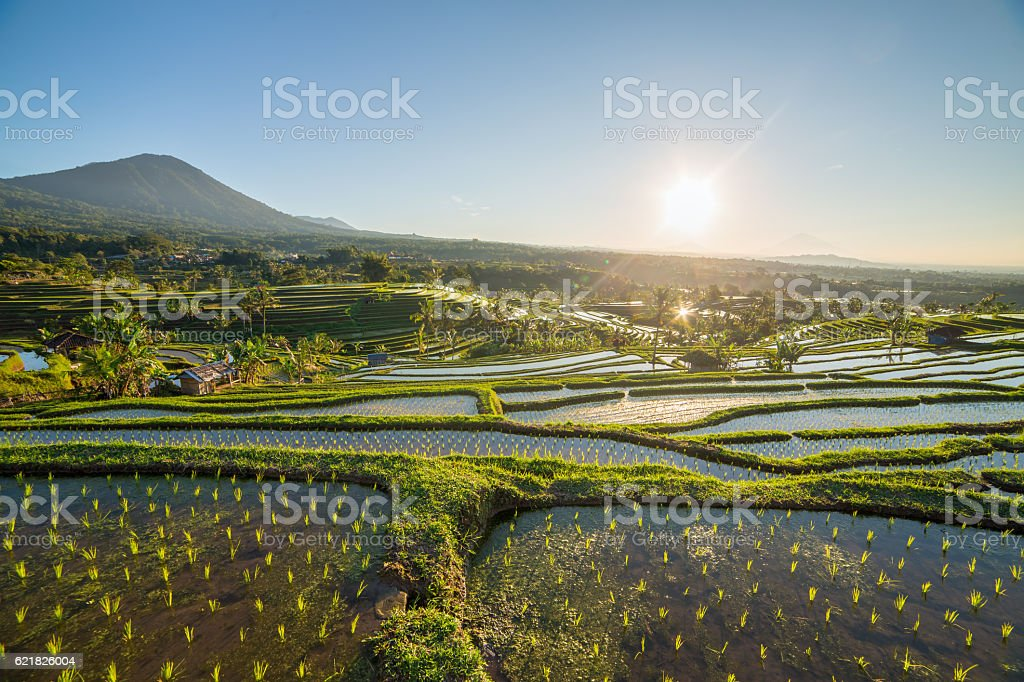 Jatiluwih Rice Terraces on a sunny day, Bali, Indonesia. stock photo