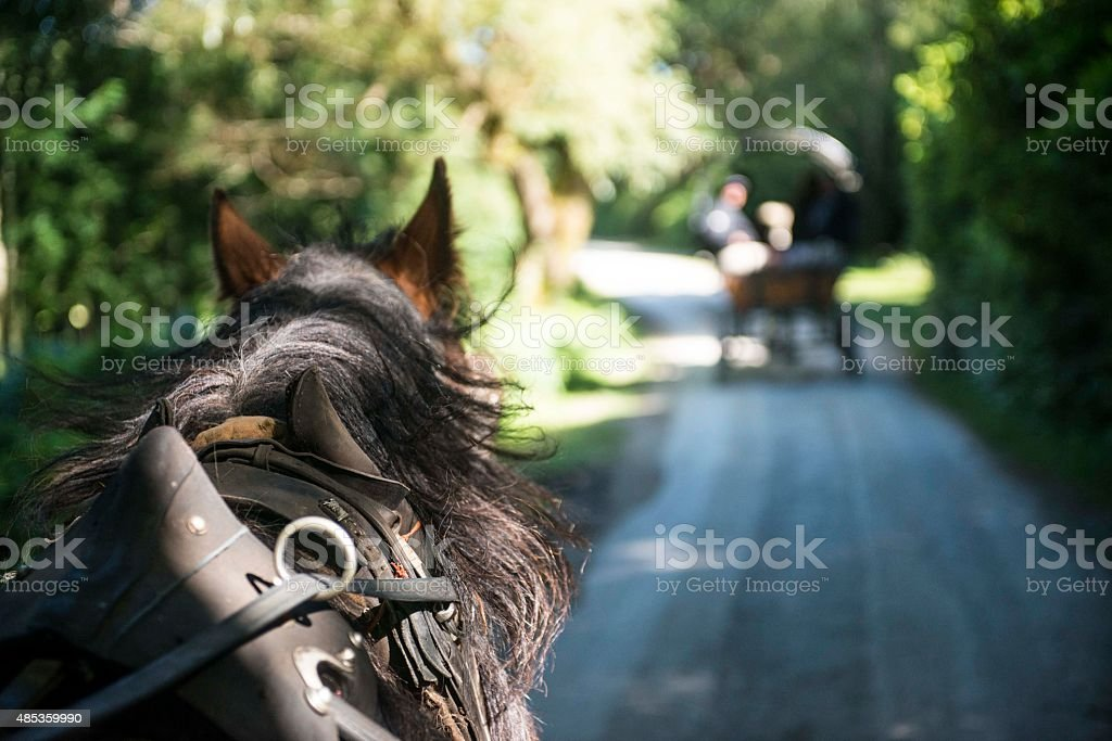 Jaunting cart in a row stock photo