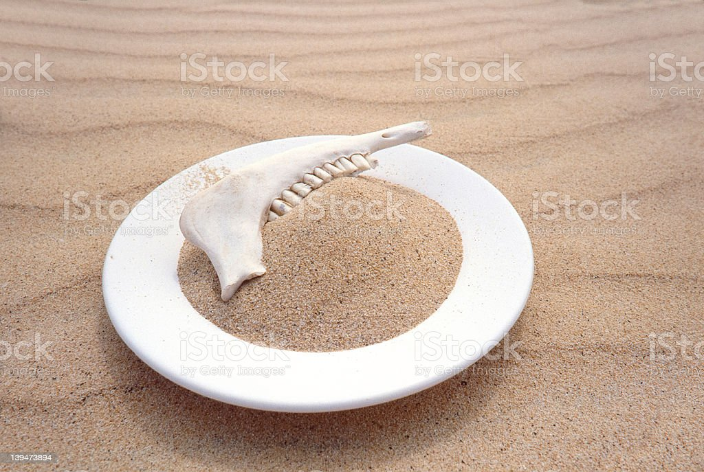 Jaw Bone Sand And White Dish royalty-free stock photo