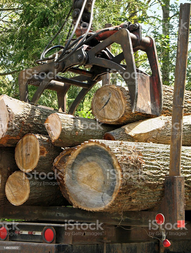 Jaws of a crane loading logs stock photo
