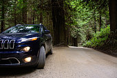 Jeep Cherokee, in the Redwood National Park, USA