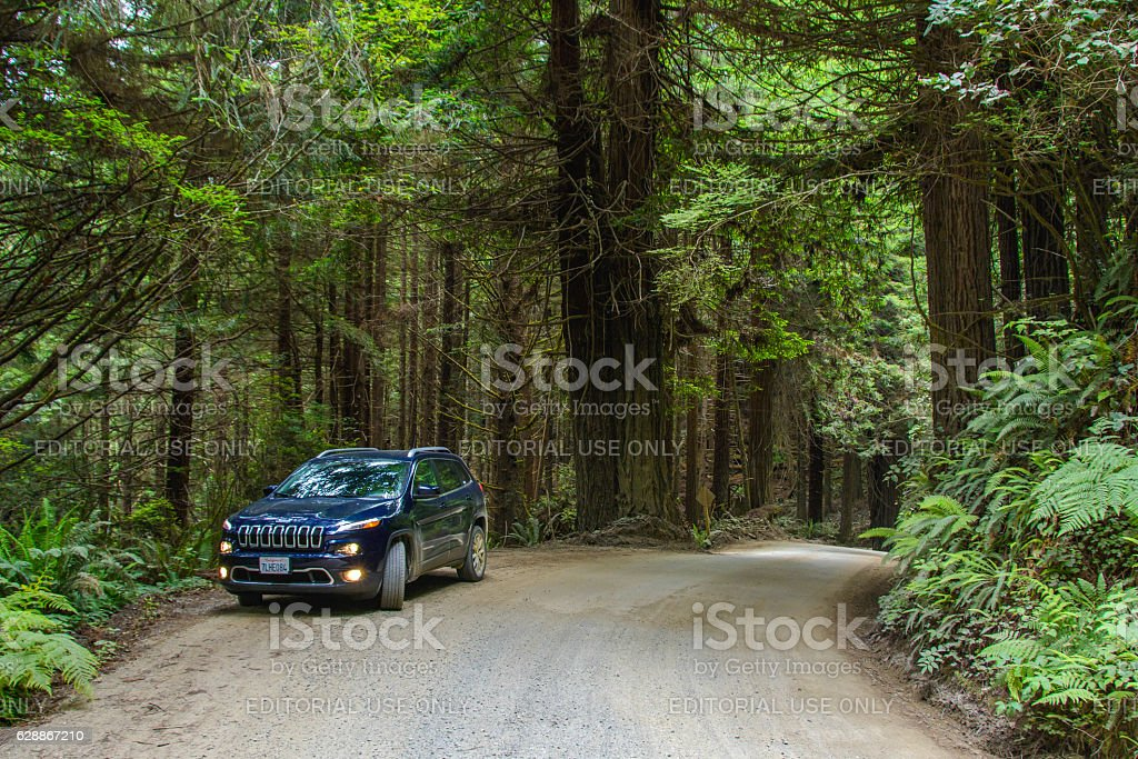 Jeep Cherokee on a country road in the forest Redwood stock photo