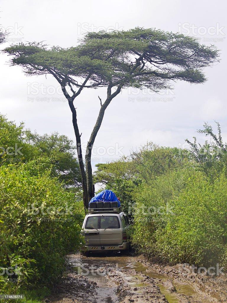 Jeep ride through tree swamp near Lake Chamo stock photo