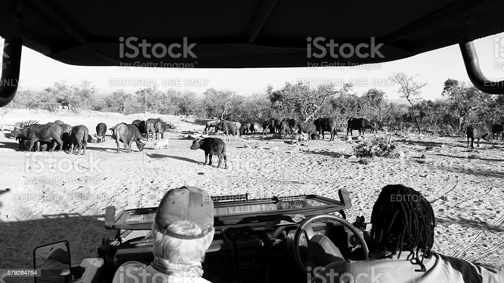 Jeep safari in the Waterberg, Limpopo,South Africa stock photo