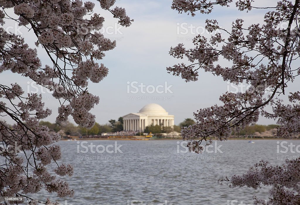 Jefferson Memorial behind cherry blossom royalty-free stock photo
