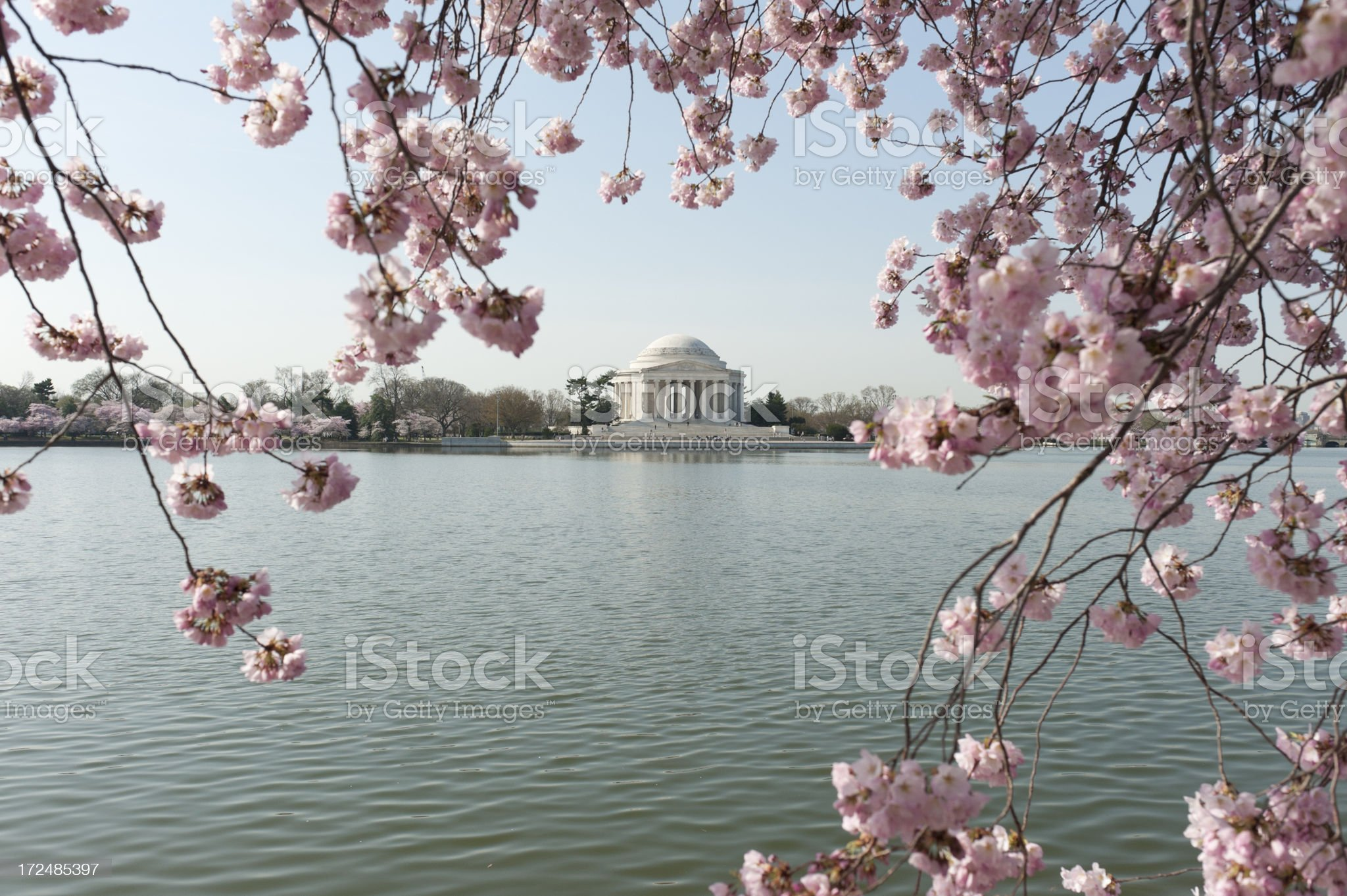 jefferson memorial with cherry blossoms out of focus royalty-free stock photo