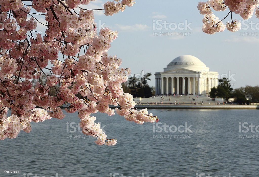 Jefferson Memorial with Cherry Blossoms stock photo