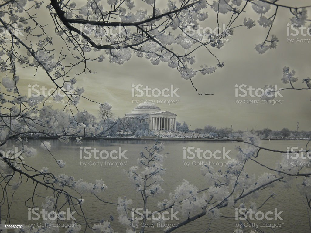 Jefferson Memorial/Cherry Blossoms in Infrared stock photo