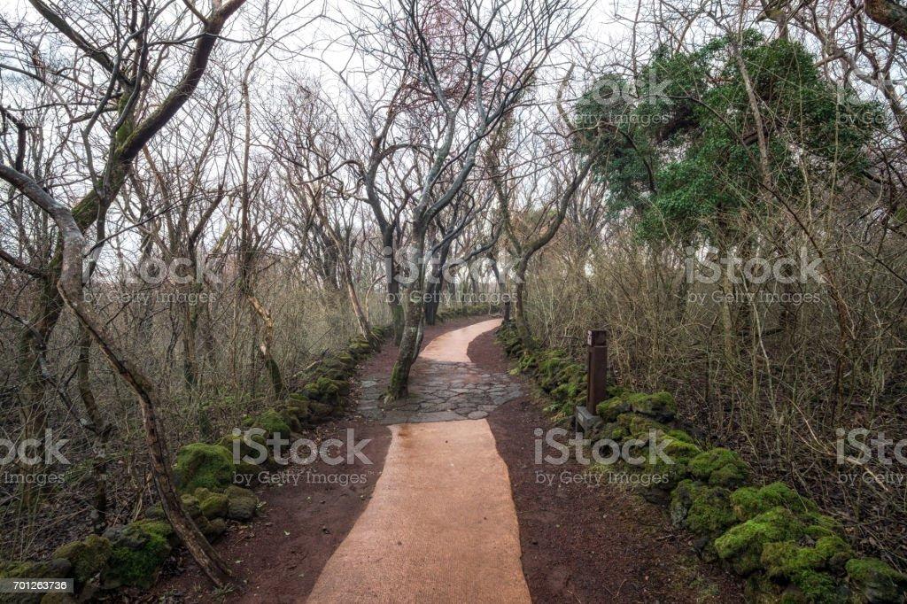 jeju stone park forest stock photo
