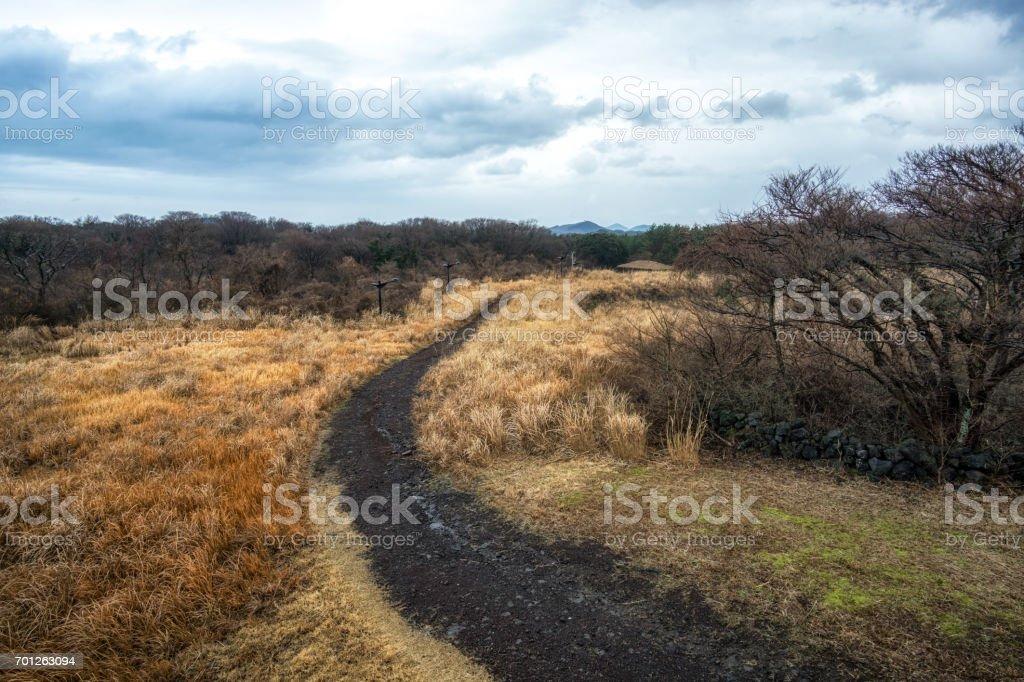 jeju stone park grassland stock photo