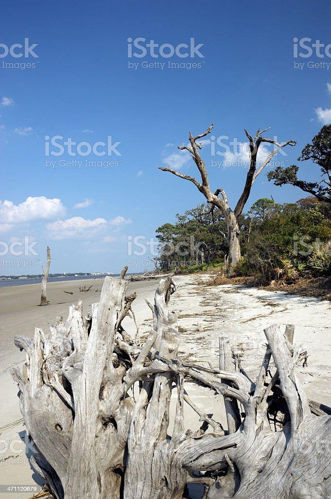 Jekyll Island Drift Wood Beach Georgia stock photo