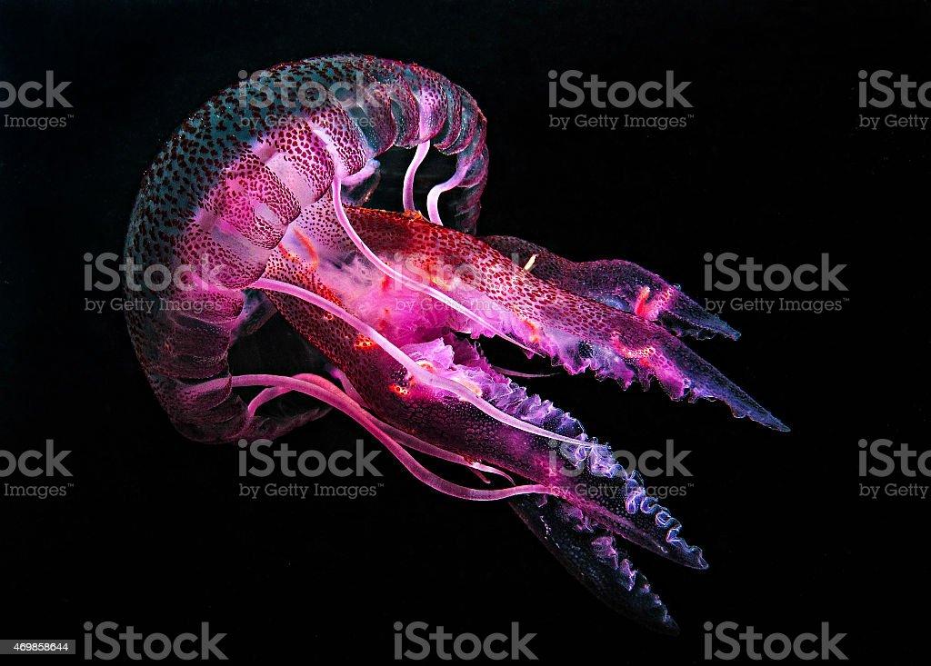 Jellyfish 3 stock photo