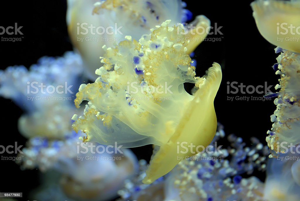 Jellyfish and friends stock photo