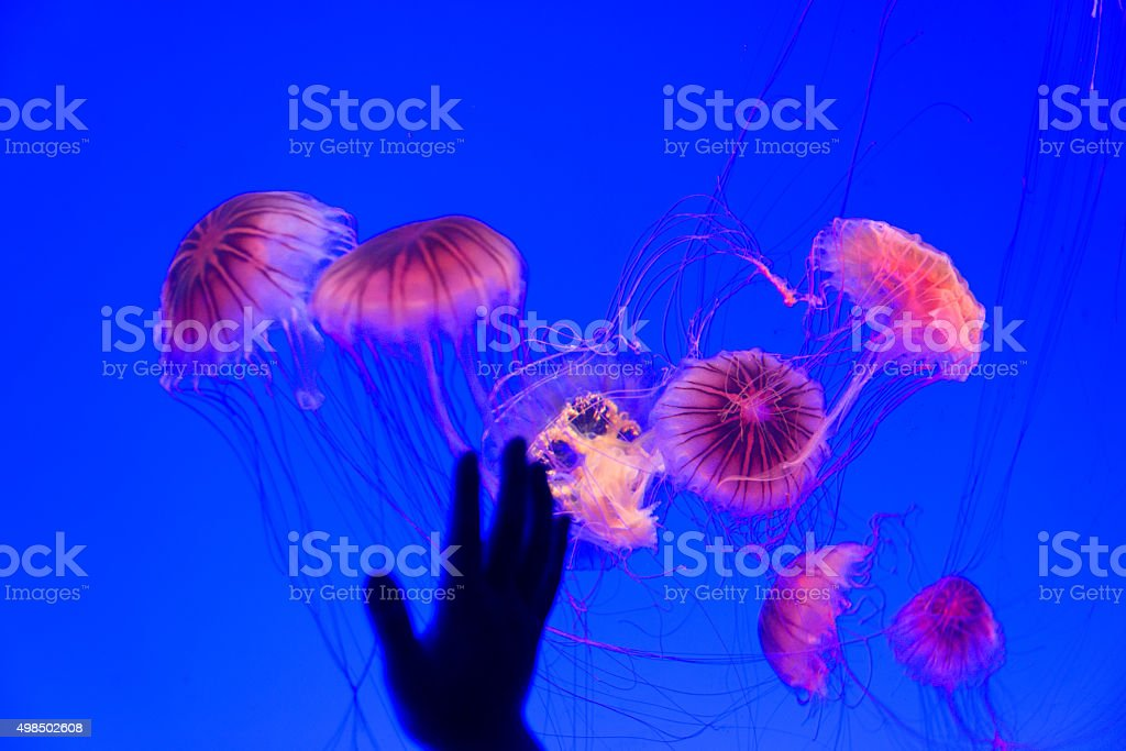 Jellyfish and human hand stock photo