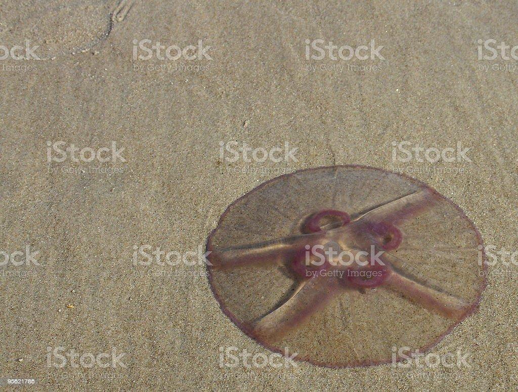 jellyfish corner stock photo