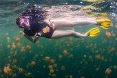 Jellyfish Lake, Rock Islands - Palau
