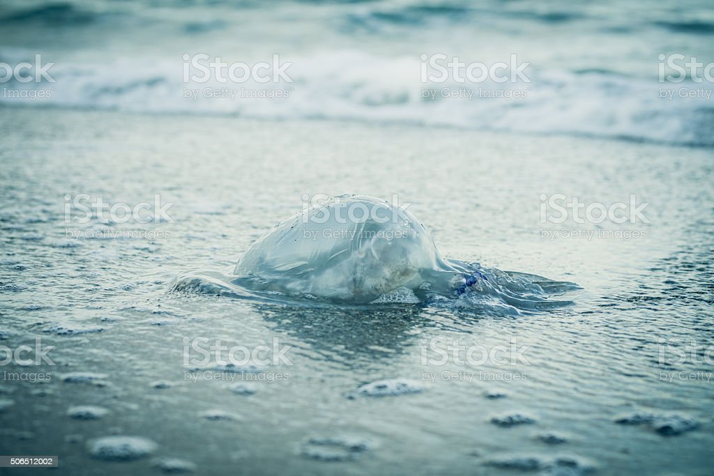 Jellyfish on the beach in a blue toning stock photo