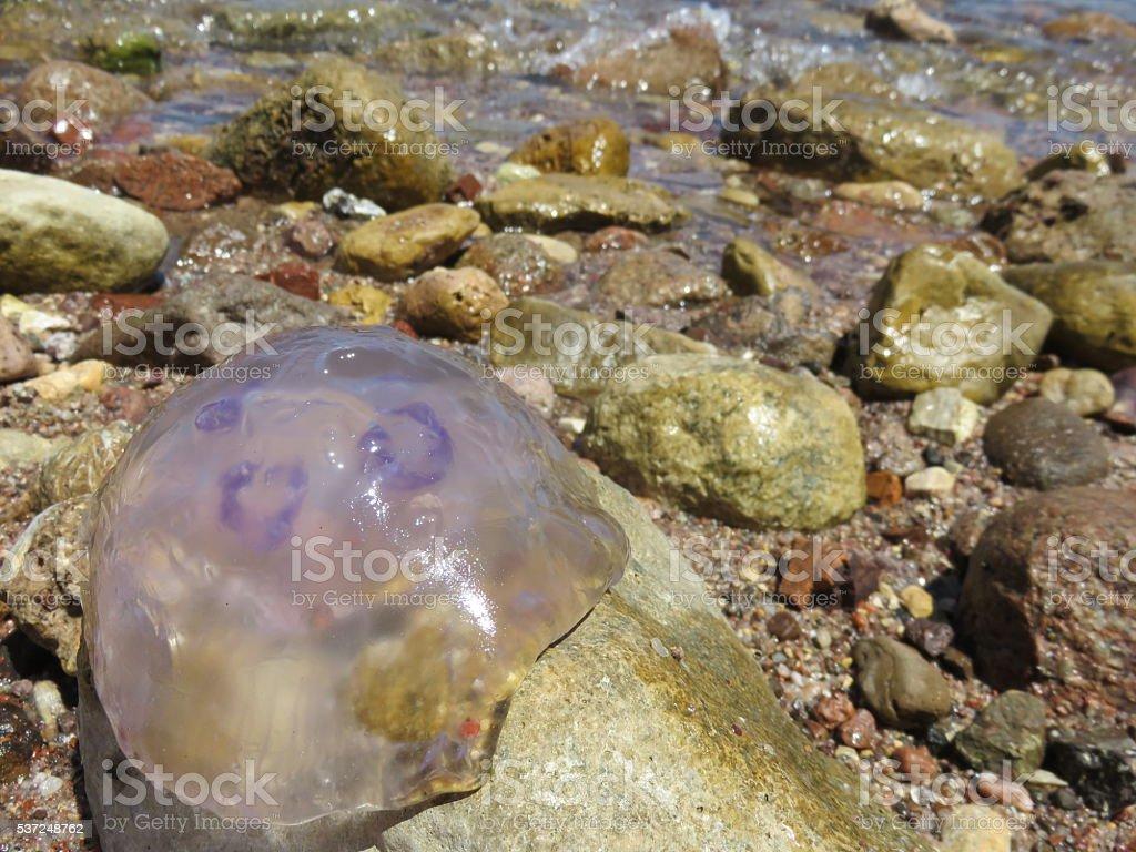 Jellyfish on the beach stock photo