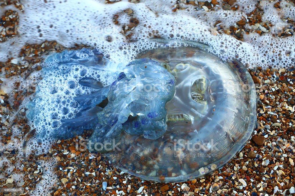 Jellyfish on the sand. stock photo