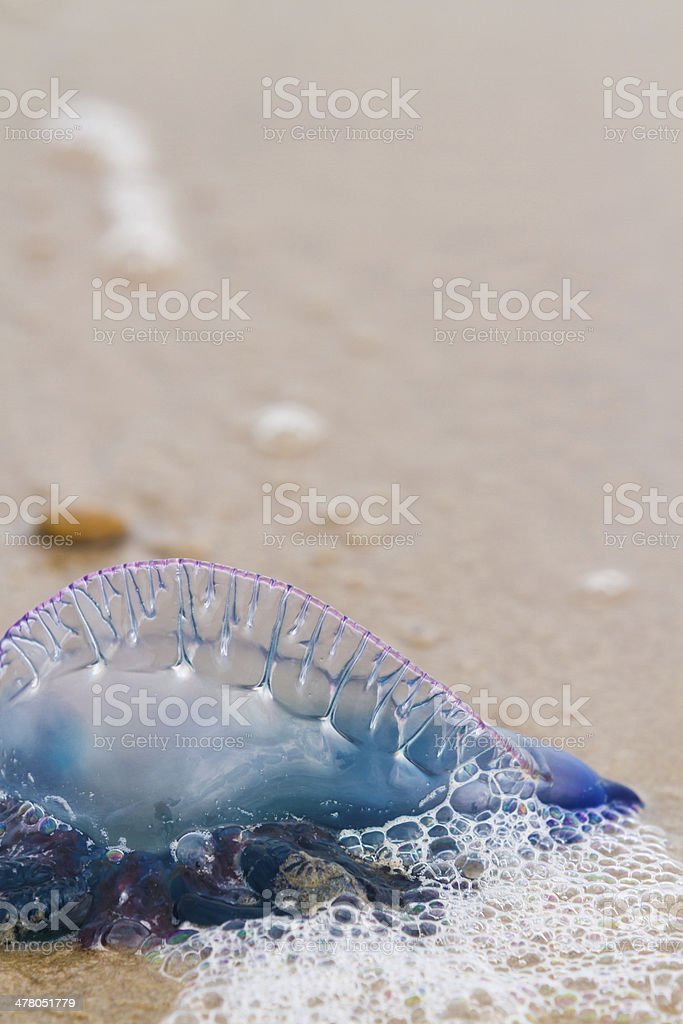 Jellyfish stock photo